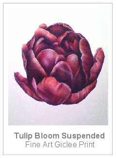 tulipsuspended.jpg